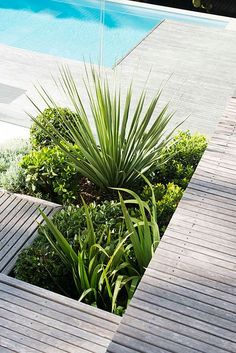 Pool + Deck + Planting | Low maintenance landscaping