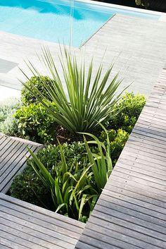 Pool + Deck + Planting | Low maintenance landscaping