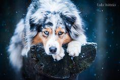 Let it snow | by aussiefoto | DeviantArt | #ʀᴏᴄᴋɪɴɢᴠᴀᴜssɪᴇs