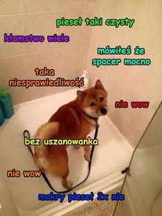 My dog hates baths, so we take him to a special bathing place. so I feel ya! Timeline Photos, Cute Funny Animals, Shiba, Animal Memes, Sports And Politics, Laughter, Therapy, Hilarious, Puppies