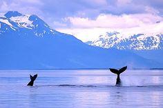 Juneau, Alaska- whale watching