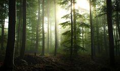 Resysta ist eine tolle Holzalternative, mit der man der Natur helfen kann. Auf diese Weise hat jeder von uns die Chance, die wilden Wälder zu retten!