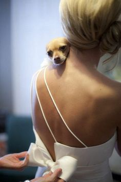 Getting ready wedding photos with your pet 2 / http://www.deerpearlflowers.com/getting-ready-wedding-photography-ideas/3/