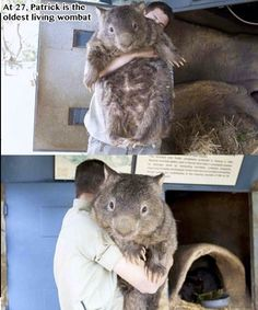 The world's oldest living wombat