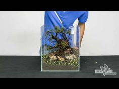 Timelapse Video Aquascaping Aquarium set up - YouTube
