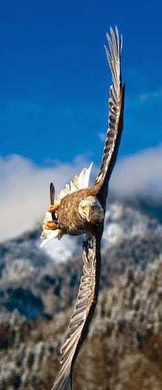Love the flight angle, incredible piloting skills!