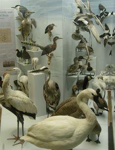 Santa Barbara Natural History Museum ~ Photo Tricie Krim