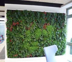 trockene blumen grüne wand als architekturelement