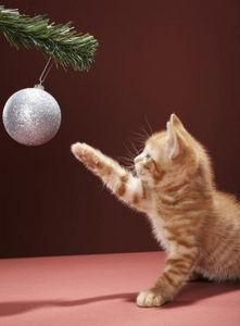 How to Train Cats Not to Attack a Christmas Tree - oh, how I have needed this info!
