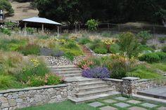 Northern California regional hillside - mediterranean - landscape - san francisco - Huettl Landscape Architecture