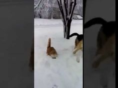 Dog Slams Cat's Face in The Snow - YouTube