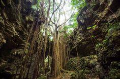 定番から穴場まで!沖縄県の人気観光スポットランキングTOP40 | RETRIP・・・沖縄の大自然を本来の姿のままに残したガンガラーの谷では、ガジュマルの巨木など、亜熱帯ならではの雰囲気満点のジャングルをガイドさんとともに見学することができます。