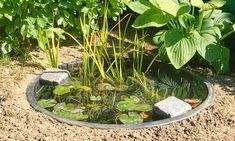 Balcony Plants, Inside Outside, Ponds Backyard, Garden Inspiration, Planters, Outdoor Decor, Nature, Gardening, Sweet