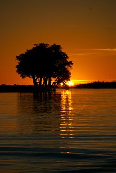 Sunset on the Zambezi River. Beautiful sunset photo taken on the river. I'd love to take a shot like this one day.