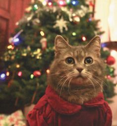 Menue Cat | Pawshake