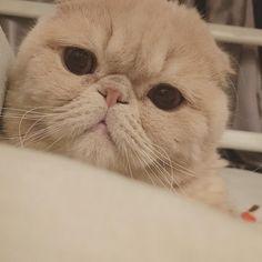Cute lips  #cat #cats #catlover #catstagram... Follow us on Instagram :D #cats #cat #catlover #lovecats #funny #fun #cute #socute #feline #felines #felinefriend #fur #furry #paw #paws #kitten #kitty #kittens #kittycat #kittylove #fluffy #fluff