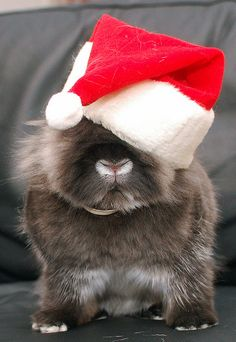 Santa Bunny.