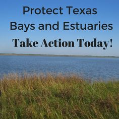 Bays and estuaries are more than just places where our rivers flow into the Gulf of Mexico. They are vital habitats where many important aquatic species reproduce, grow, and thrive.