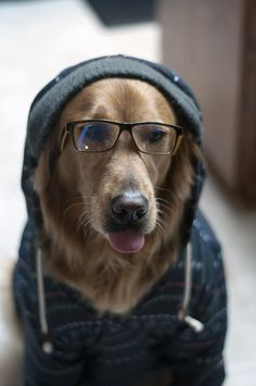 One cool dog.
