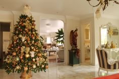 Teresa Cristina Angelieri. Montagem e Desmontagem de árvore de Natal