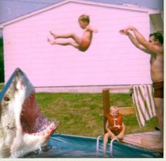 This is why we can't have pet sharks!