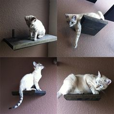 wall mounted cat bed | Super Mario Brothers Cat Complex & Other Awesome Cat Furniture From ...