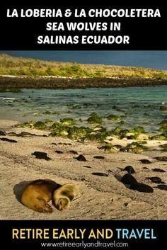 LA LOBERIA & LA CHOCOLATERA - SEA WOLVES IN SALINAS - https://www.retireearlyandtravel.com/la-loberia/