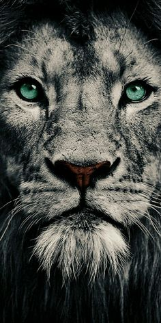 Face of a king! - The Effective Pictures We Offer You About animal wallpaper woodland A quality pict Lion Wallpaper Iphone, Animal Wallpaper, Wallpaper Backgrounds, Wallpaper Quotes, Disney Wallpaper, Lion Tattoo Sleeves, Sleeve Tattoos, Lion Eyes, Lion Photography