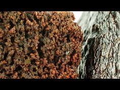 Chec de ciocolată și avocado - YouTube How To Dry Basil, Avocado, Cooking Recipes, Herbs, Youtube, Desserts, Food, Tailgate Desserts, Deserts