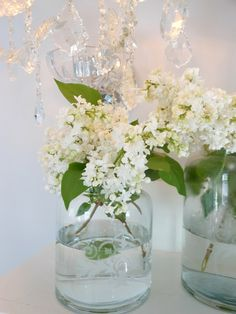 White lilacs, definitely white lilacs