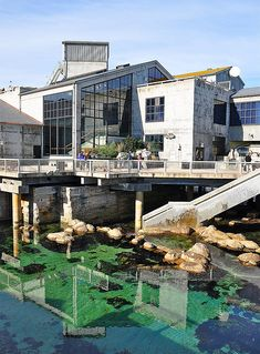 Monterey Bay Aquarium, California. (Not quite SF, but worth the trip.)