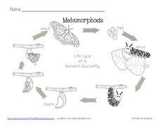 Metamorphosis Freebie!