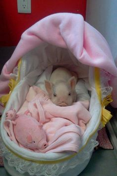 When I will have my baby piglet, he/she will also be spoiled just like in this picture, but only with less pink and more green ;P