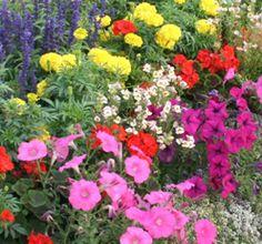 flower garden ideas - Google Search