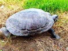 World Images, Turtle, Stock Photos, Nature, Animals, Animals Beautiful, Sweetie Belle, Turtles, Naturaleza