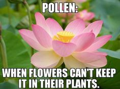 biology humor Funny Pictures Of The Day - 34 Pics List Of Flowers, Different Flowers, Allergy Memes, Allergies Funny, Biology Humor, Smart Garden, Image Memes, Pink Lotus, Lotus Flower
