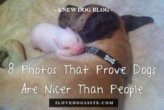 Oh my gosh, I just melted!!! Must see. http://theilovedogssite.com/8-proofs-that-dogs-are-nicer-than-people/?src=PIN_ILDS_DogsNicerThanPeople_1-30-14