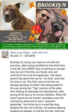 MURDERED 8/1/16 Brooklyn Center My name is BROOKLYN. My Animal ID # is A1083074. I am a male br brindle am pit bull ter mix. The shelter thinks I am about 5 YEARS old. I came in the shelter as a OWNER SUR on 07/28/2016 from NY 11207, owner surrender reason stated was NO TIME. http://nycdogs.urgentpodr.org/brooklyn-a1083074/