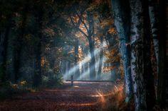 Nieuw in mijn Werk aan de Muur shop: Fall light