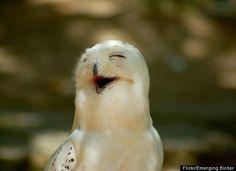 Google Image Result for http://www.cuteandweird.com/wp-content/uploads/2009/11/bird_smile.jpg