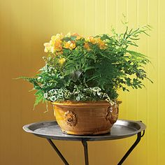 Invite spring indoors with this sunny container garden.