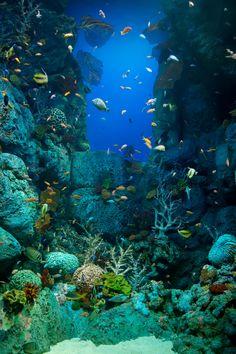 Beautiful underwater scene at SEA Life Aquarium, Sentosa, Singapore. Underwater Creatures, Underwater Life, Underwater Photos, Ocean Creatures, Life Under The Sea, Under The Ocean, Sea And Ocean, Ocean Deep, Ocean Sunset