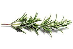 Ervas e outros condimentos são alternativa para preparar alimentos saborosos