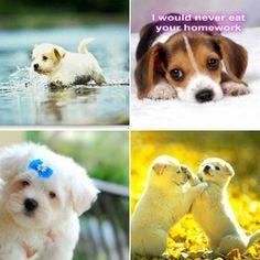 Cutest Puppy Photo? (Group 2)  Visit anchr to vote!