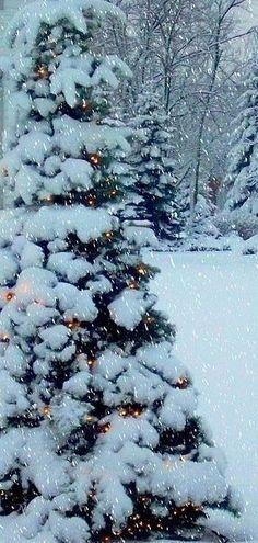 Outside Christmas tree snow