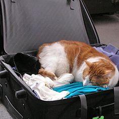 Cat Travel Tips | Catster