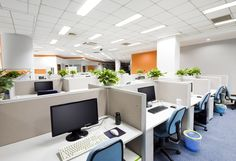 Plants can help the harmony and health of your office space according to scientists from Scandinavia who also discovered that those offices with plants demonstrate a fall in staff illness.