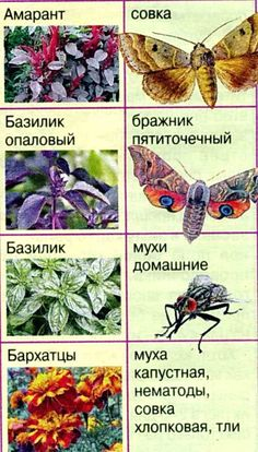 rastenija-repellenty-1