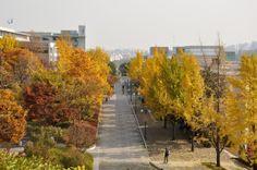 Fall at Kookmin University, the International Hall 국민대 국제교육관 앞
