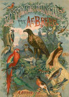 Brehm's Tierleben Frontispiece, Spanish Edition, Rare